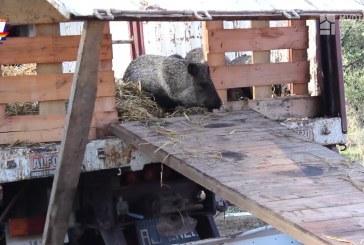 Tres hombres procesados sin prisión por presunta comisión del delito de caza abusiva de animales de especie considerada en extinción